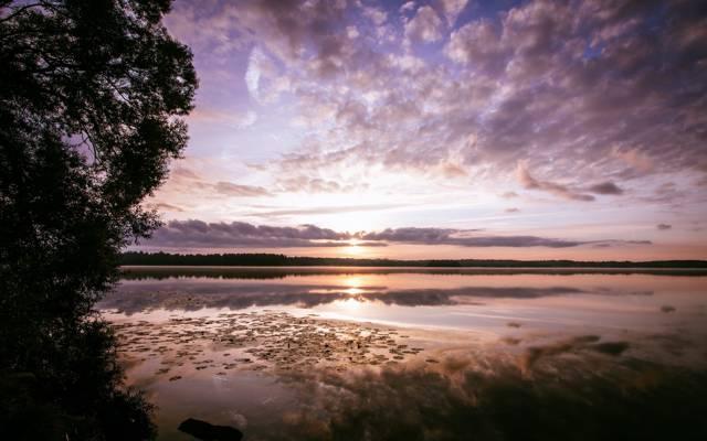 早晨,湖,黎明,反射,森林