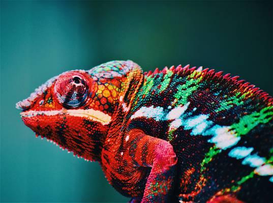 动物,模糊,动物园,多彩的高清壁纸