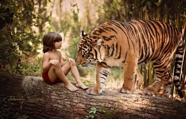 男孩,树干,老虎,树,Mowgli,性质,日志,捕食者,孩子,动物