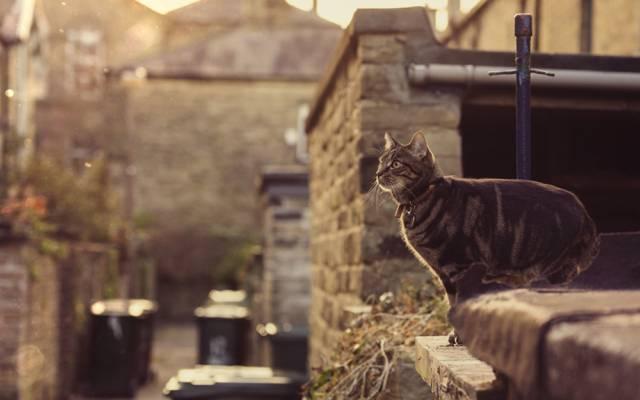 衣领,眼睛,跳,猫,阳光,屋顶