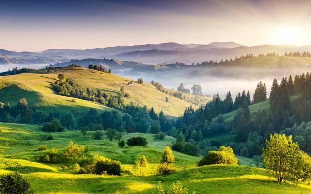 壁纸太阳,自然,雾,树,绿色,丘陵,黎明,风景