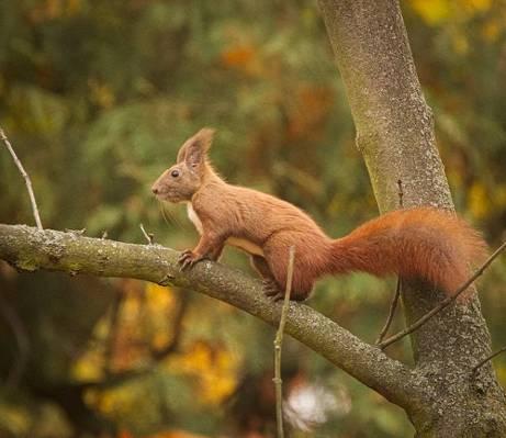 在白天高清壁纸树分支上的棕色松鼠