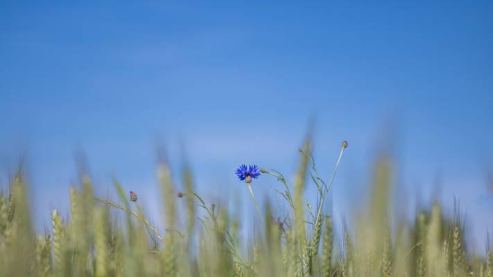选择性焦点摄影的蓝色花朵高清壁纸