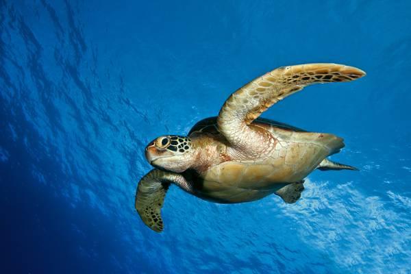 海,海,水,海底世界,龟