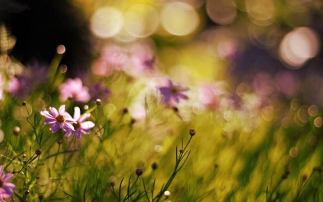 模糊,植物,散景,花卉,性质