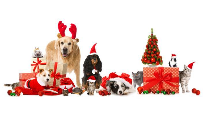 龟,猫,蛇,帽子,兔子,新年,狗,豚鼠,人字形,礼品,动物,球