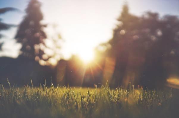 清晨的陽光