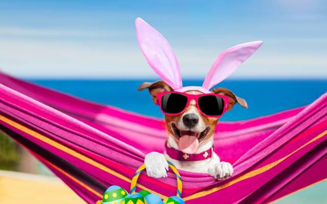 爪子,篮子,天空,幽默,耳朵,散景,鸡蛋,沙滩,衣服,杰克罗素梗犬,语言,地平线,...