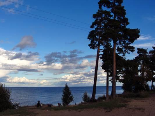 拉多加,性质,树木,俄罗斯,湖,照片,天空,云