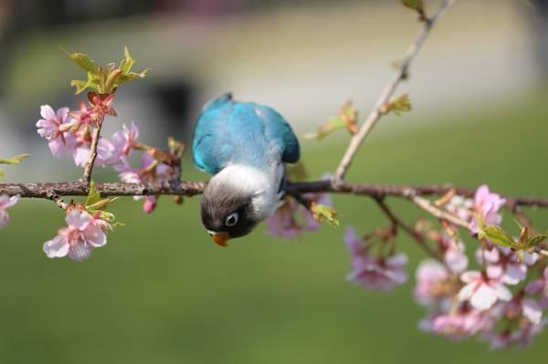 开花,鸟,鹦鹉,科,鲜花