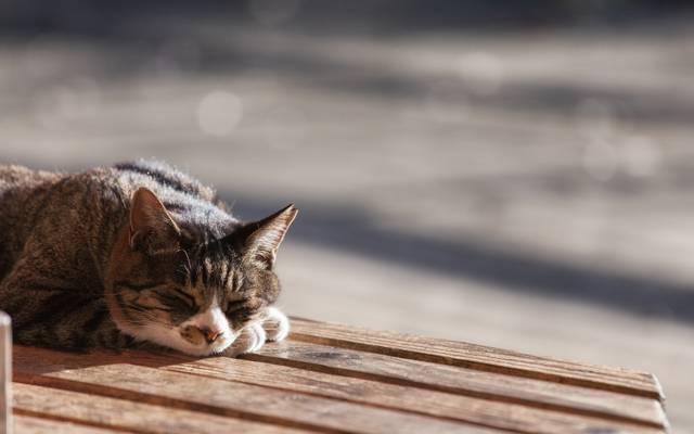 猫,羊毛,睡觉,猫