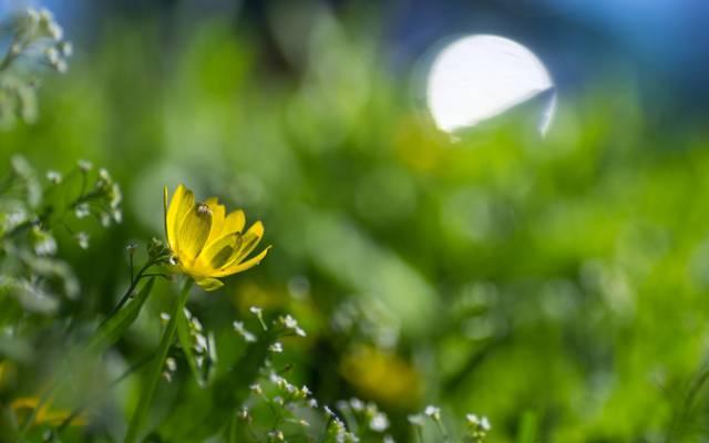 鲜花,草地,春天,眩光,黄色,花卉