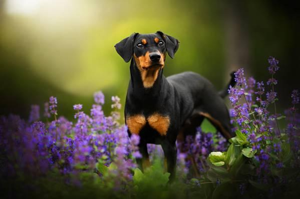 壁纸小叮当,狗,绿党,散景,鲜花