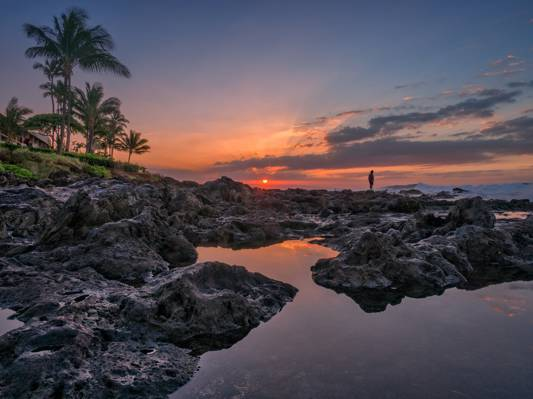 棕榈树,夏威夷,海岸,Napili海滩,Andalso E湾,夏威夷,毛伊岛,海洋,毛伊岛,日落