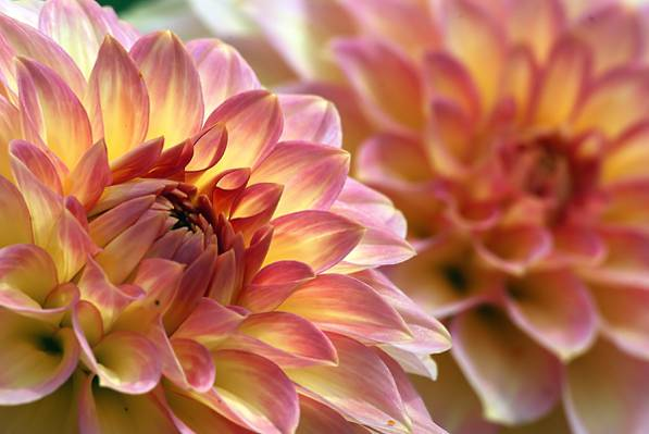紫色和黄色的郁金香花白天高清壁纸