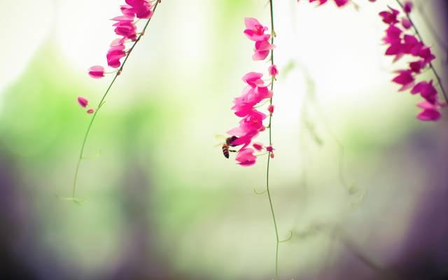 鲜花,粉红色,触角,蜜蜂,昆虫