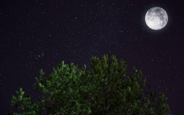 月亮,夜晚,星星,松树,空间