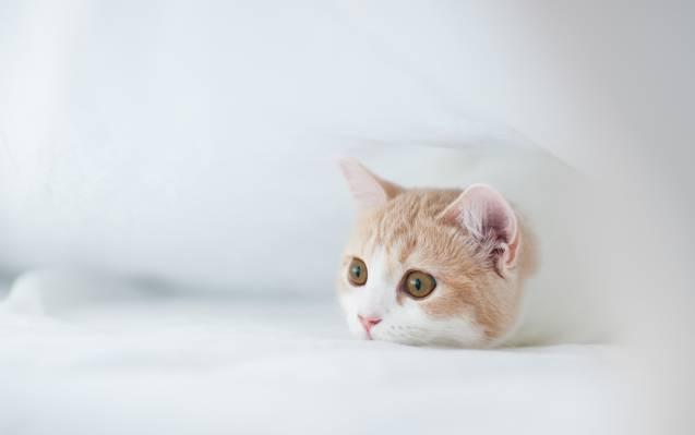©Ben Torode,汉娜,小猫