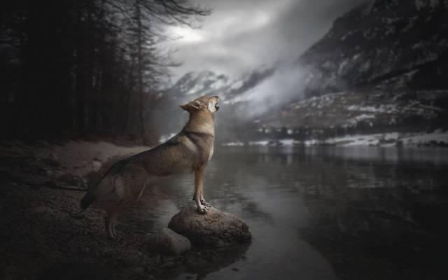山,荒野的声音,河,嚎叫,狗