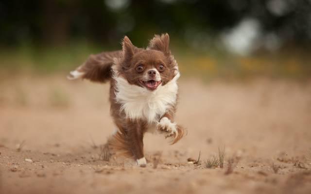 狗,看,跑,每个