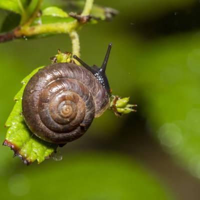棕色的蜗牛上绿叶特写摄影高清壁纸
