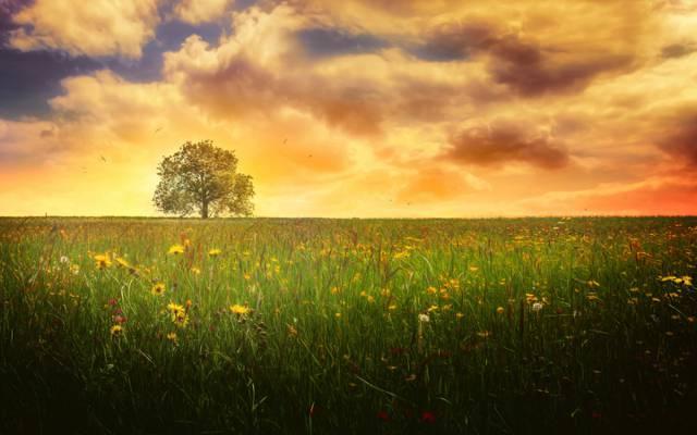 树,孤独的树,田地,夏天,治疗,天空,云