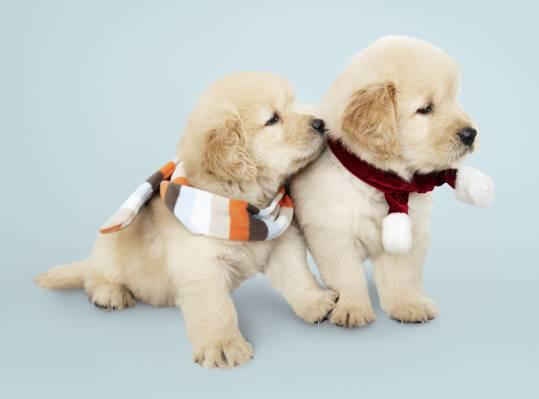 可爱狗狗朋友圈背景图