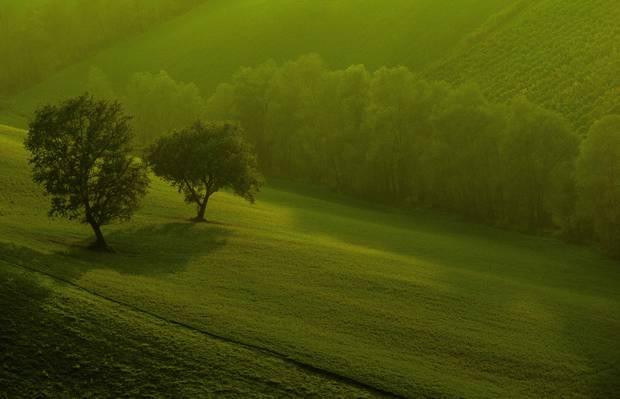 领域,早上,树木,绿色,性质