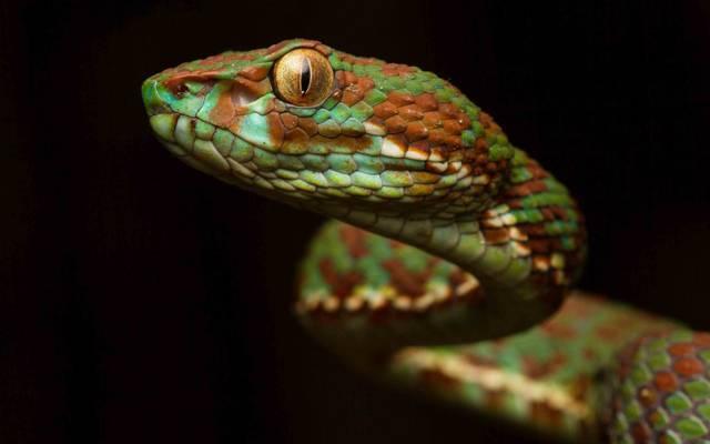 蛇,看,颜色,背景,毒蛇,鳞