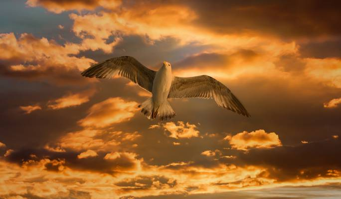白色和棕色的老鹰,在白色的云层下白天高清壁纸