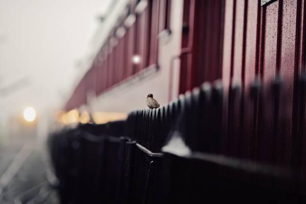 街,篱笆,麻雀