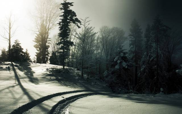壁纸黑与白,雪,冬天,雾,太阳,树木,痕迹