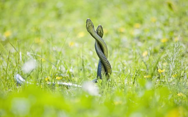 蛇,背景,性质