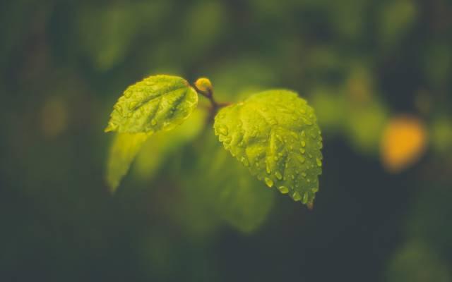 宏观,叶子,叶子,滴