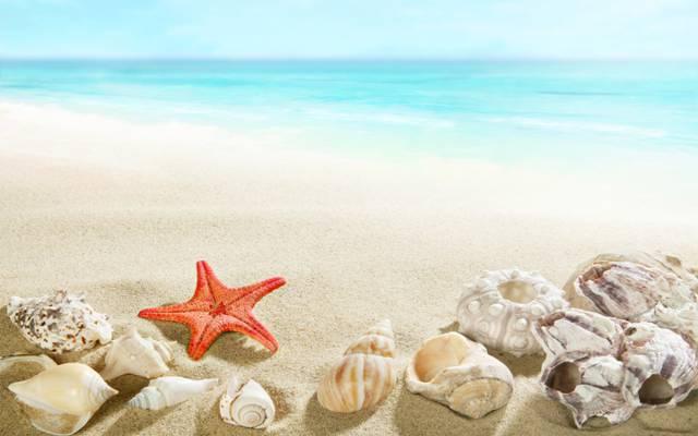海,贝壳,沙滩,沙子