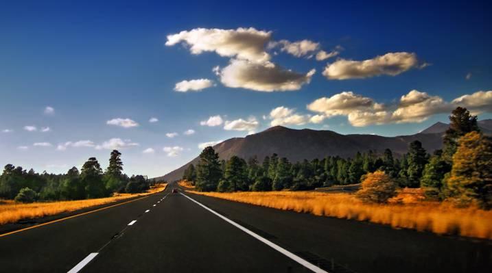 景观摄影的路面和森林树木和山高清壁纸