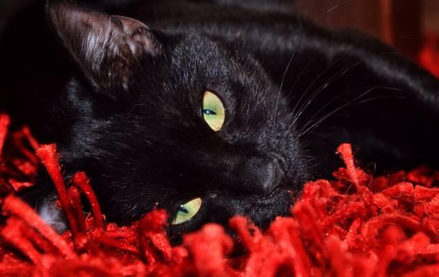 看,谎言,Koshak,雄猫,看起来,猫
