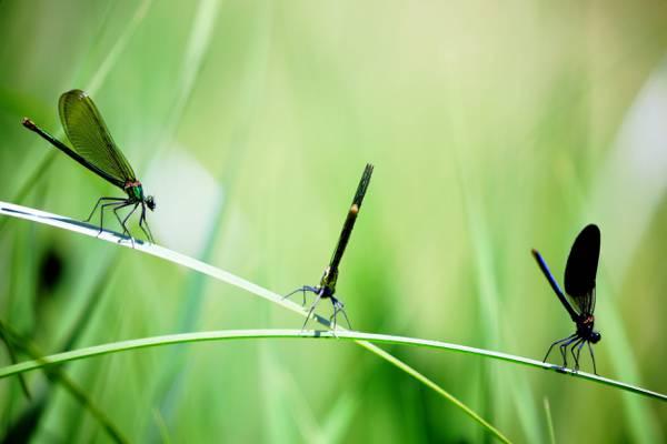 3蜻蜓在草高清壁纸
