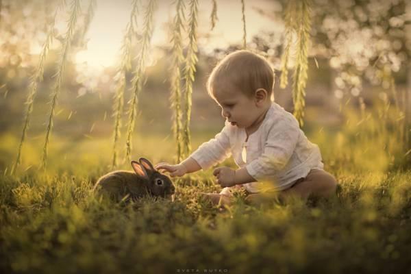 野兔,孩子,性质
