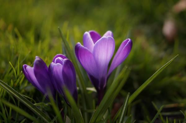 春天,花卉,丁香,紫罗兰色高清壁纸