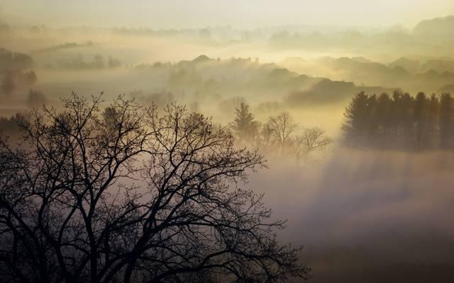 夫妇,早晨,自然,雾,荷马沃森公园,树木,加拿大