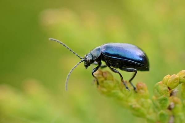 黑色昆虫在绿叶高清壁纸