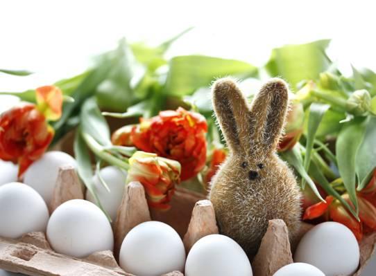 鸡蛋,野兔,鲜花,复活节