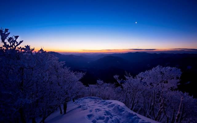 傍晚,夕阳,雪,树,冬天