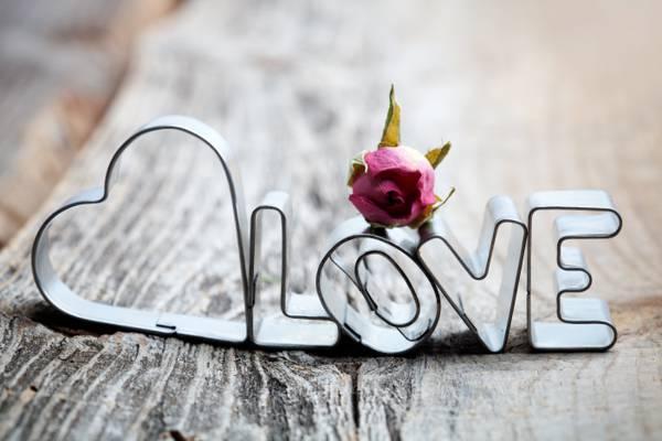 干,心,信件,爱,玫瑰,董事会,爱,题词
