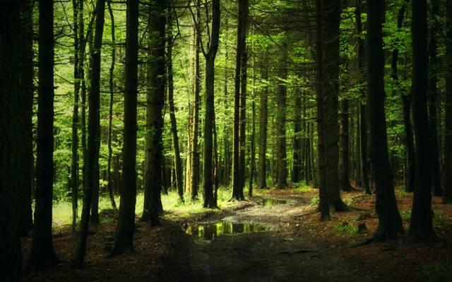 水坑,针,丛林,轨道,森林,步道