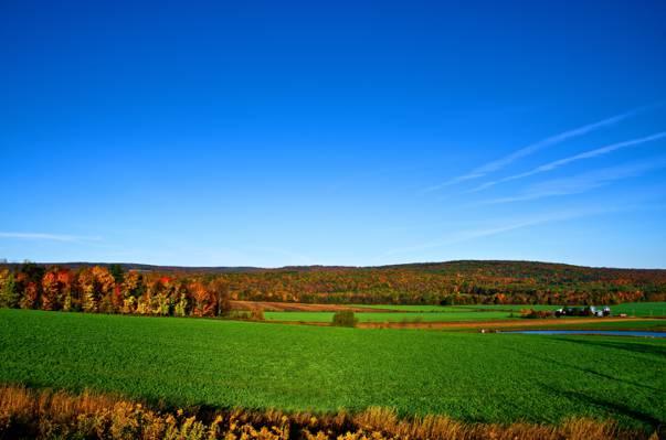 天空,田野,树木,地平线,秋天,森林
