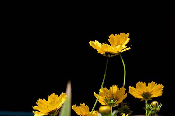 浅焦点摄影的黄色的花朵高清壁纸