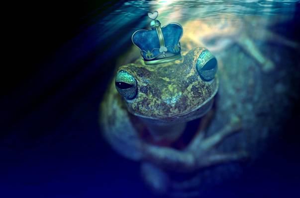 棕色和黄色的青蛙,身穿蓝色和灰色的皇冠三维图高清壁纸
