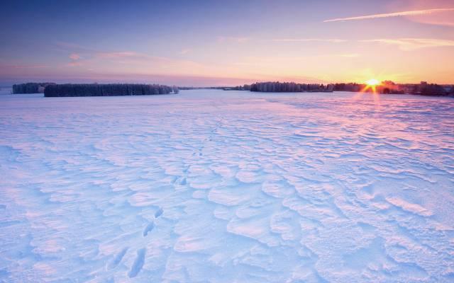 壁纸雪,家,树,场,冬天,太阳,天空,痕迹